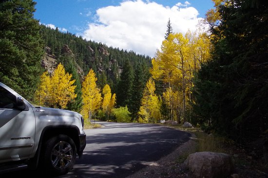Georgetown, CO: Aspen and pine trees