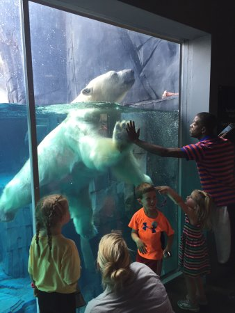 St. Louis Zoo (Saint Louis, MO): Top Tips Before You Go ...