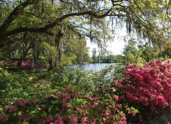Azaleas, Airlie Gardens