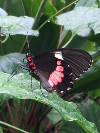 Butterfly Rainforest 사진