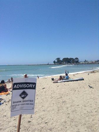 Dana Point, CA: shark advisory