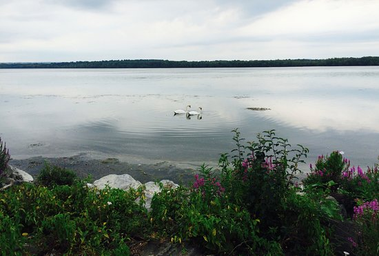 Liverpool, NY: Pair of Swans on Onondaga Lake