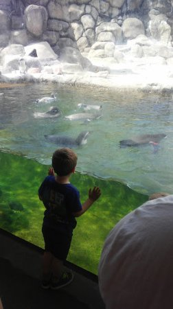 Rosamond Gifford Zoo: Penguins