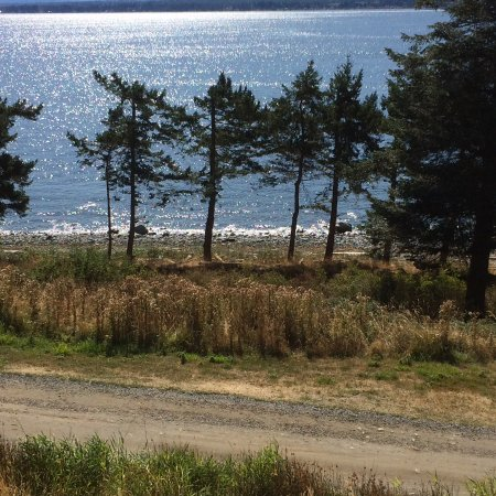 Quadra Island, Canada: View from our sun-deck luncheon table. The beach beyond offered-up it's treasures of petroglyphs