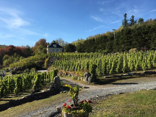 Wine Tour Near Dc