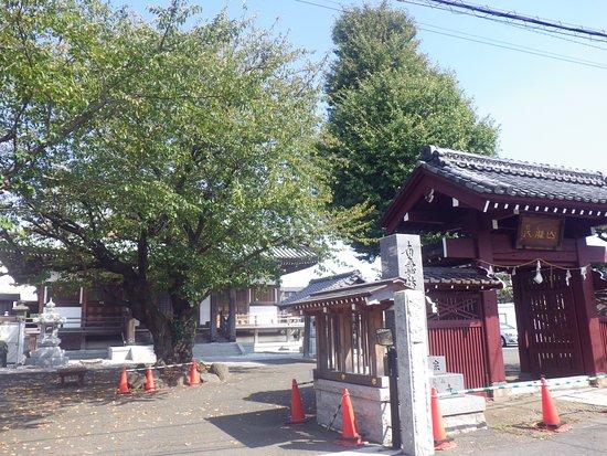 Fujisawa, اليابان: 桜の花が美しい寺です