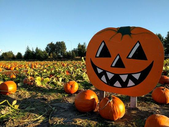 Carpinitos Pumpkin Patch Kent 2019 All You Need To