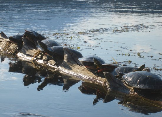 Columbia River Paddle: Some new friends I met while Kayaking.