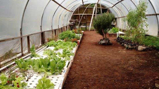 Naalehu, Hawaje: Our greenhouse aquaponics system growing veggies