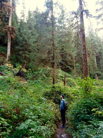 Quinault, WA: taking it all in