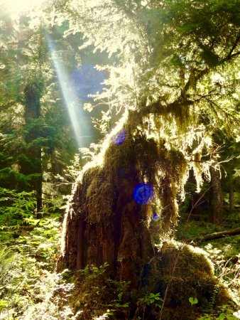 Quinault, WA: recommend going early so the sunlight touches in