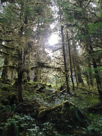 Quinault, WA: really dense forest