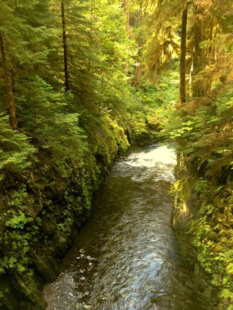 Quinault, WA: view from the bridge