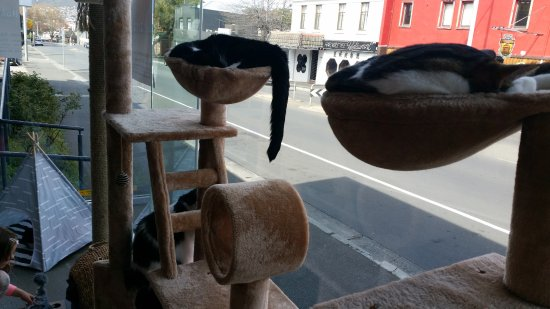 Hobart Cat Cafe: It was naptime for some of the cats!