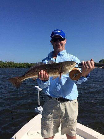 Boca Grande, FL: Redfish can be caught on spin or fly!