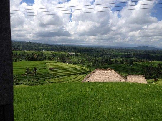 the best villa in Canggu Area