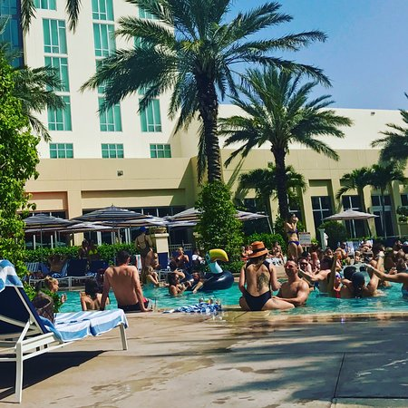 Saay At The Pool Picture Of Hilton West Palm Beach