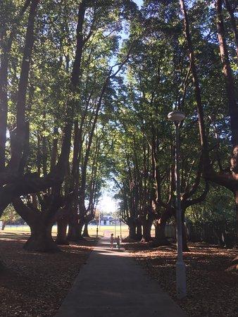 beautiful Petersham Park
