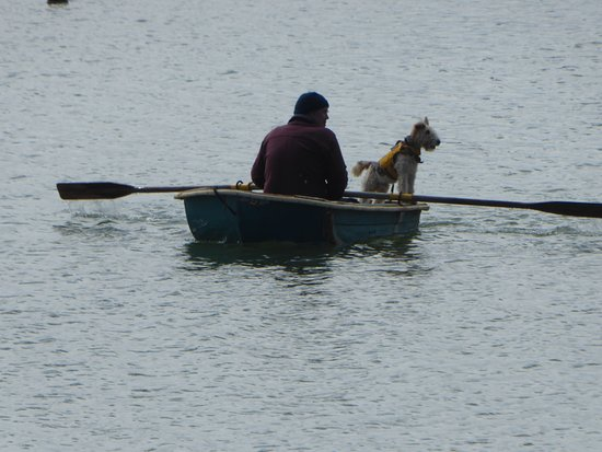 Mangonui, New Zealand: Just to prove it.... yes, a dog with life jacket acting as captain while his owner rows ashore.