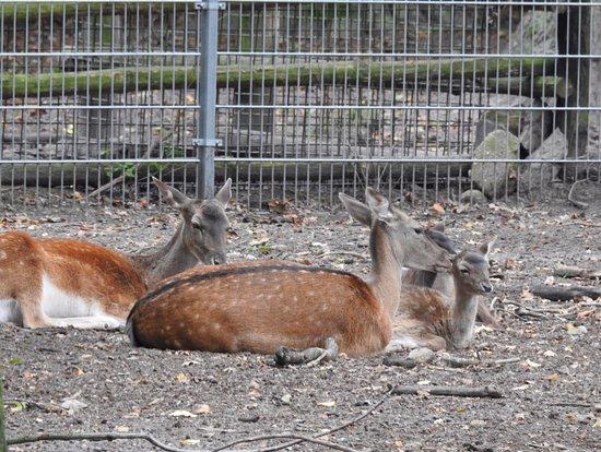 Animal Farm: W słonecznym nastroju