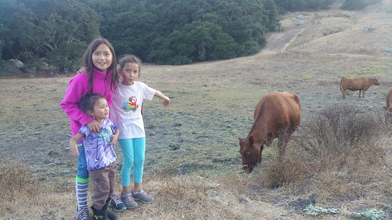 Bishop Peak: The girls were so excited to see cows