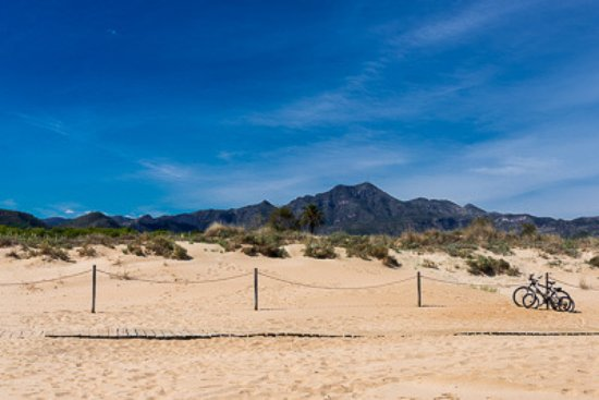 Gandia, إسبانيا: Un ambiente tranquilo para disfrutar con tu perro
