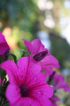 Pension Untersberghof: Ein kleiner Teil der vielen Blumen.