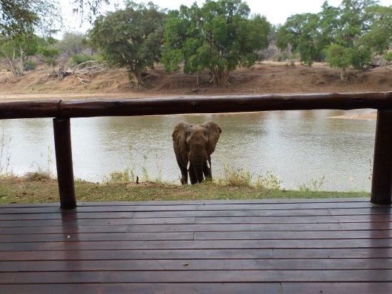 Naledi Bushcamp and Enkoveni Camp: photo8.jpg