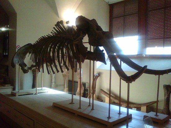 University of Florence Natural History Museum : Unico