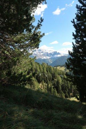 Val Gardena, Italia: Есть и лес и прекрасные виды