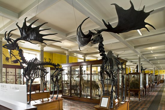 Natural History Museum Dublin Email