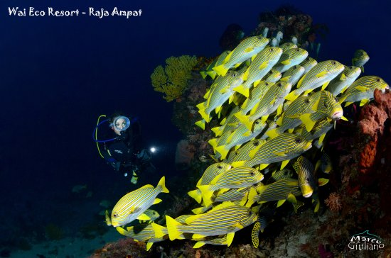 Wai Eco Resort - Scubacqueando Diving: DSC_6458_large.jpg