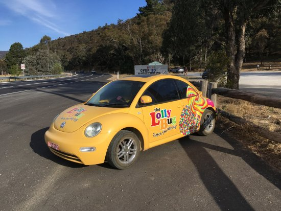 The Lolly Bug - Hartley NSW