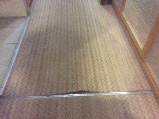Lodge on Loch Lomond: Badly torn carpet