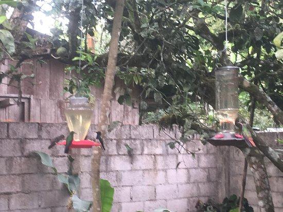 Cabanas Armonia y Jardin de Orquideas: photo5.jpg