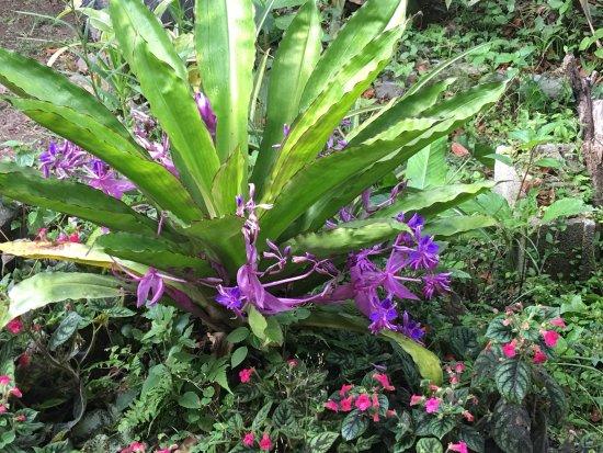 Cabanas Armonia y Jardin de Orquideas: photo6.jpg