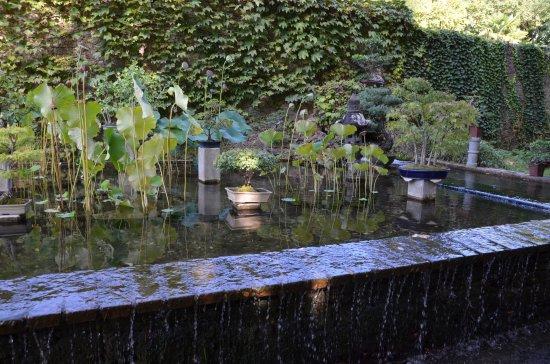 Generargues, France: Le bassin aux bonzaîs