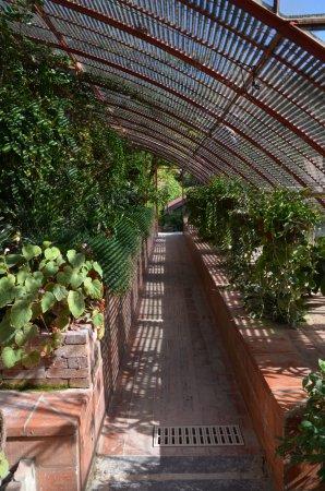 Generargues, France: Les serres