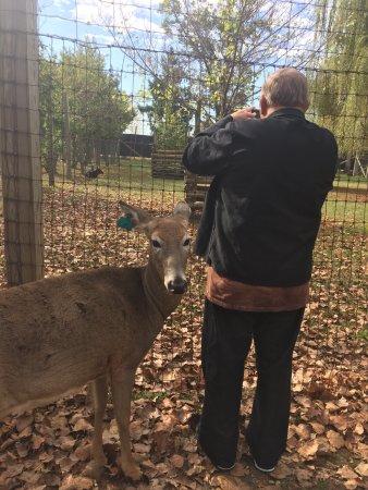 Wisconsin Deer Park: photo0.jpg