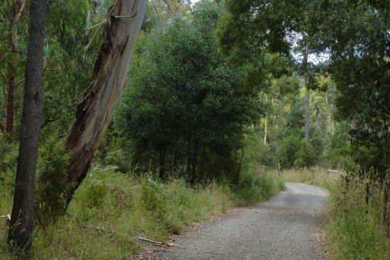 Belgrave, Australien: Birdsland Reserve