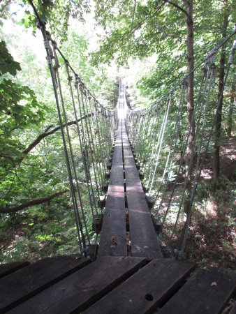 Turkey Point, Canada: Tree Treck/Zip Lining