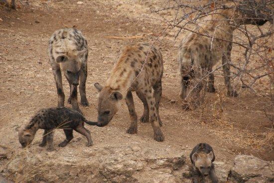 Mashatu Game Reserve Photo