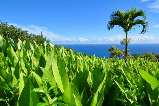 Garden of Eden Maui - Picture of Garden of Eden Arboretum ...