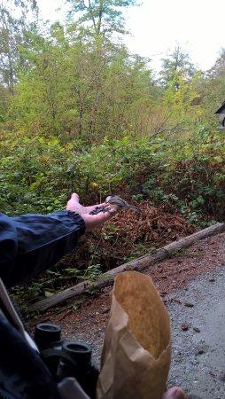 Delta, Canada: Feeding the little chickadee