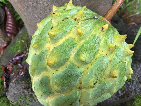 Kilauea, HI: Exotic fruit on the tour