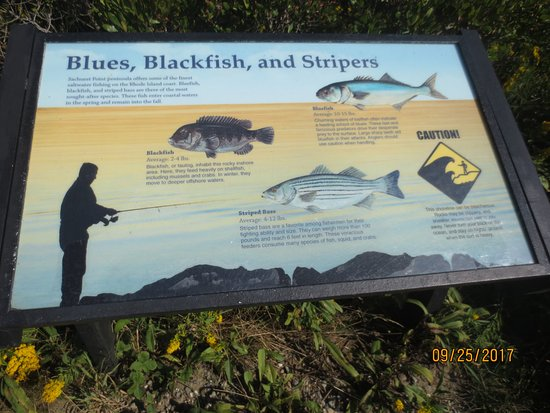 Sachuest Point National Wildlife Refuge: informative sign