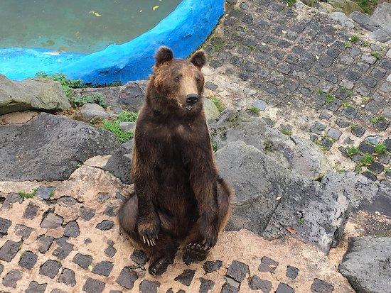 Wild- und Freizeitpark Klotten Cochem: photo1.jpg