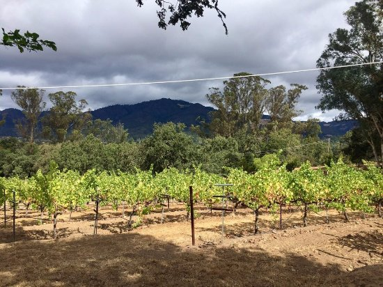 MacLeod Family Vineyard: Mountain in the distance
