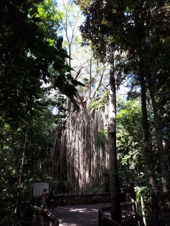 Yungaburra, Australia: Amazing