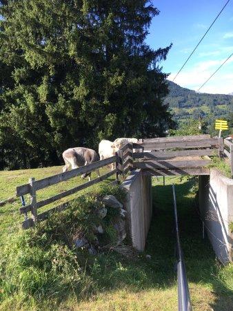 Mieders, Austria: photo1.jpg